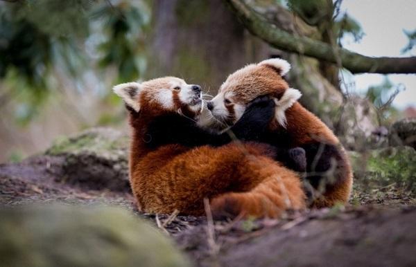 Топ-9 самых больших зоопарков в мире