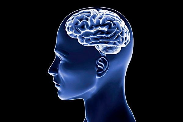 Большой мозг - не признак умного человека