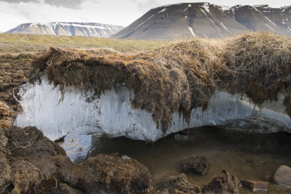Ученые рассчитали глубину промерзания почвы по данным со спутника