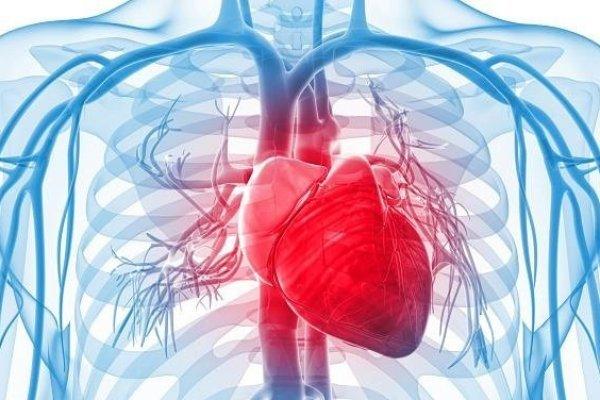 Как Уильям Гарвей сделал открытие системы кровообращения человека