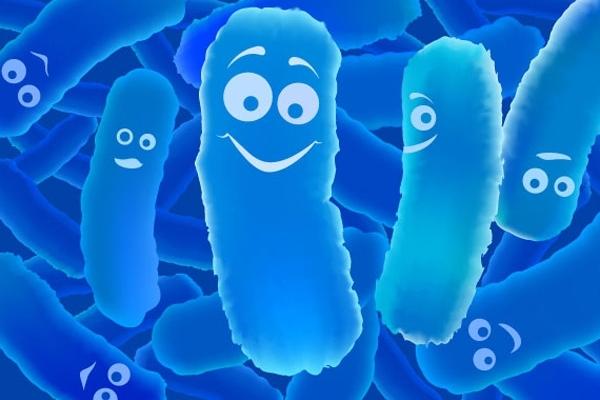 Эти бактерии могут стать лучшим средством против комаров