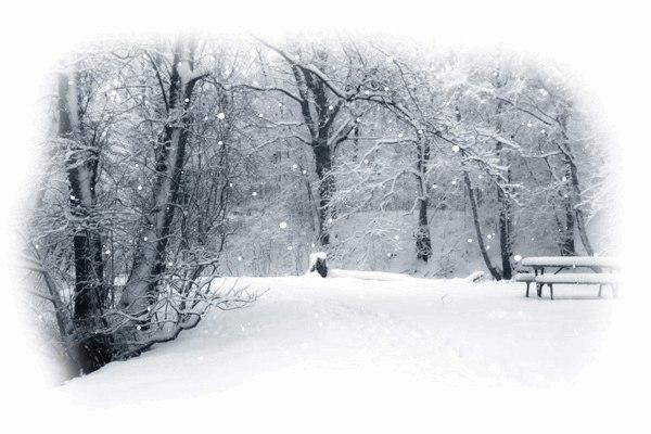 Факты о жизни, где зимняя сказка длится вечно