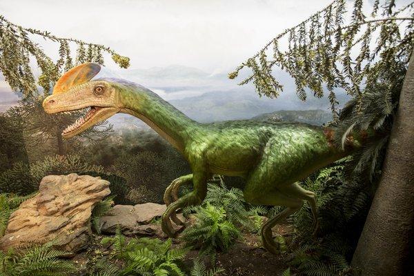 Гадрозавры: новый член династии динозавров
