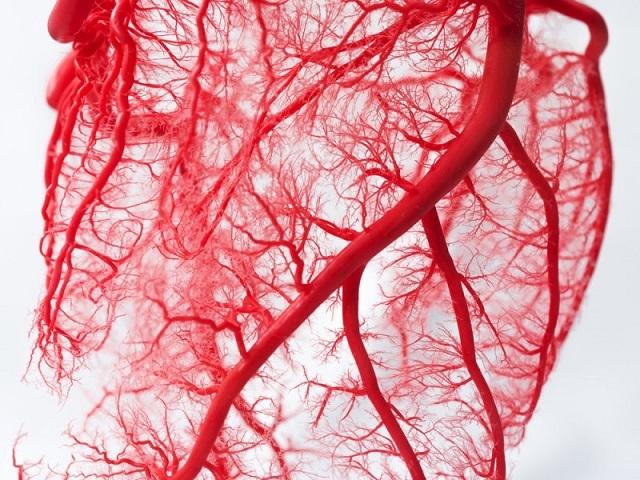 Немецкие ученые обнаружили в организме человека новую сеть кровеносных сосудов