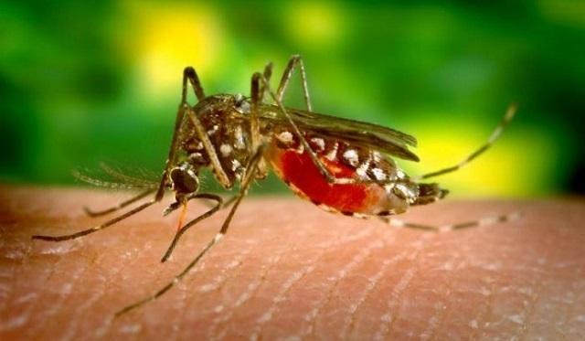 Исследователи: малярийные паразиты научились приспосабливаться