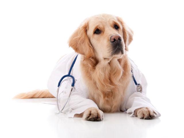 Собаки чувствуют запах болезней