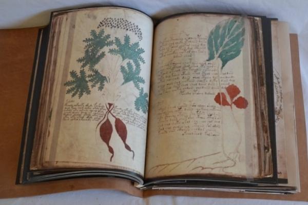Пустые сенсации: расшифровка рукописи Войнича