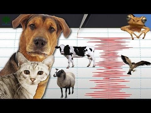 Icarus и бирки на животных помогут предсказывать катастрофы