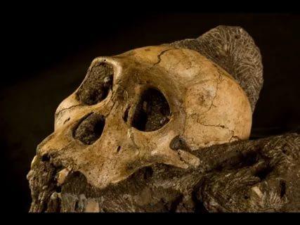 Археологи нашли останки предка человека, жившего 11 млн лет назад