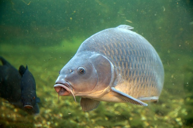 Лондонская рыба употребляет наркотики