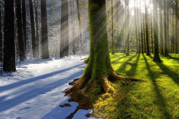 Экологи озвучили способ предотвратить изменение климата