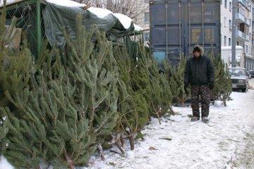 Вторая жизнь елки: куда сдать новогоднее дерево?