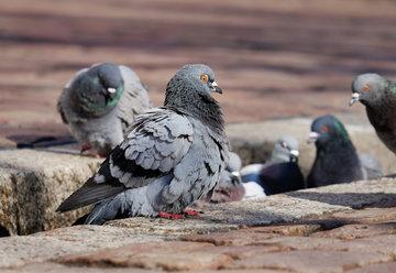 Российский биолог опроверг опасность бесснежной зимы для птиц