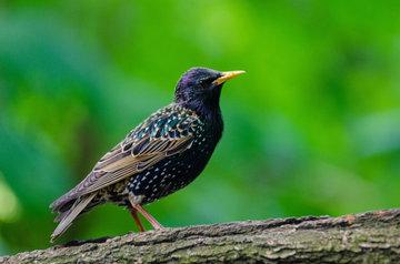 Орнитолог оценил роль перелётных птиц в распространении коронавируса