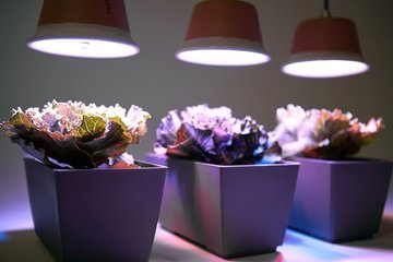 Воздействие искусственного света на здоровье