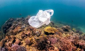В Японии создали уникальный биоразлагаемый пластик на основе растений