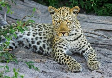 Минприроды утвердило план сохранения редких видов животных