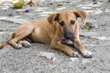 В Москве разработали новую схему помощи бездомным животным