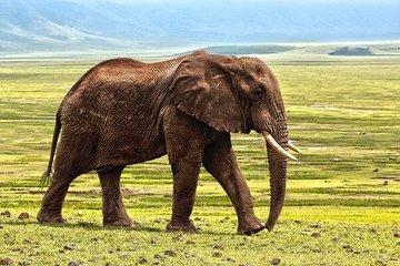 В Германии обнаружили скелет слона возрастом 300 тыс. лет