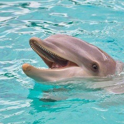 Биологи обнаружили у дельфинов способность к социальному обучению