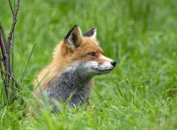 Минприроды Коми призывает жителей не кормить диких животных