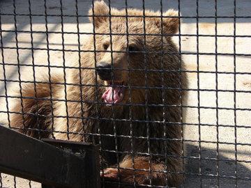 Жители Таганрога просят спасти животных из местного живого уголка