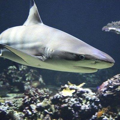 В кишечнике глубоководных акул обнаружили пластик