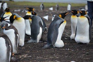 В Антарктиде нашли колонии редких пингвинов