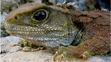 Учёные обнаружили в Новой Зеландии ближайшего родственника динозавра