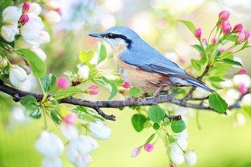 Орнитологи сравнили пение птиц по утрам с зарядкой у людей
