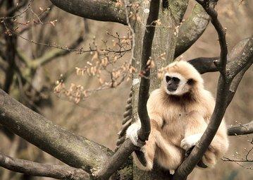 Палеонтологи обнаружили в Индии новый вид древних приматов