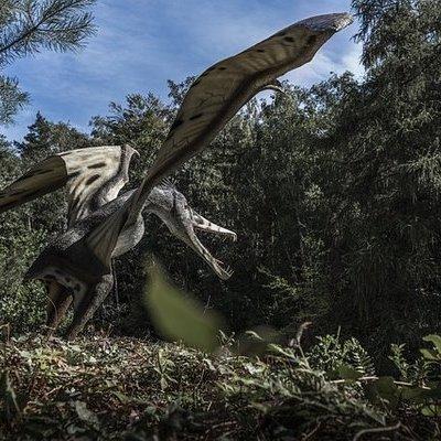 В Марокко обнаружили останки птерозавра с острым клювом