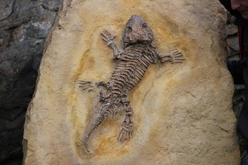 Китайские палеонтологи открыли новый вид древнего морского хищника