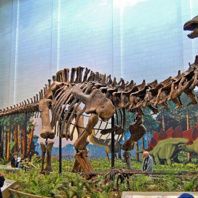 Глобальное потепление сделало динозавров-зауроподов гигантами