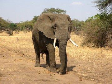 В Индии освободили слона, упавшего в 20-метровый колодец