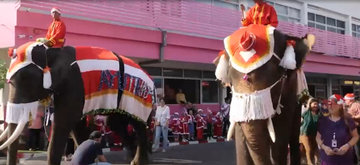 В Таиланде слонов заставили носить защитные маски
