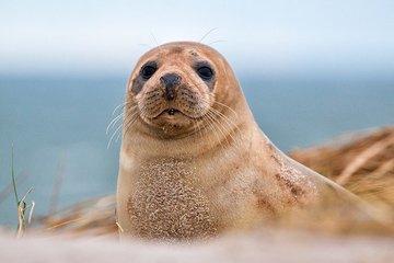 Тюлени способны общаться под водой с помощью ультразвука