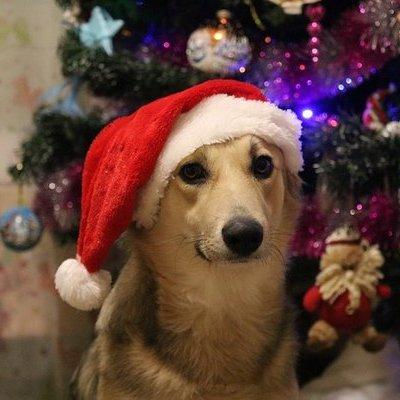 Кинологи советуют не брать собак смотреть новогодний салют