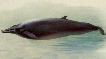 Океанологи открыли новый вид китов