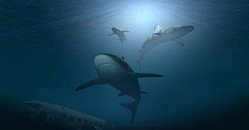 Из-за потепления Мирового океана акулы могут стать меньше и слабее