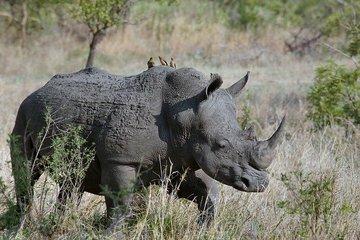 На Филиппинах нашли кости носорога возрастом 700 тыс. лет