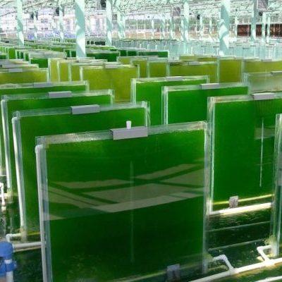 Биореактор на водорослях ликвидирует CO2 лучше, чем растения