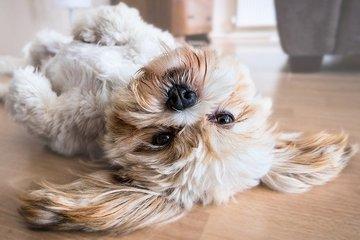 Собаки способны осознавать границы собственного тела