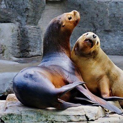 В Московском зоопарке рассказали о реакции его обитателей на потепление