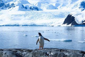 Антарктида: история и современное состояние