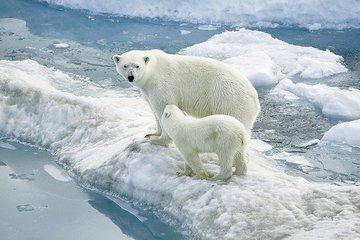 Северный полюс - независимая область, он гораздо теплее Южного и другие  интересные факты
