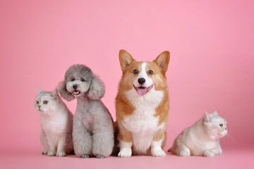 Правительство поддержало законопроект о чипировании животных