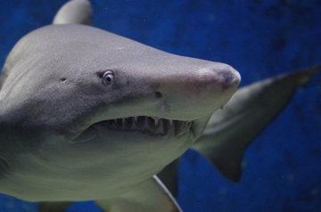 Предки акул перестали видеть цвета 460 млн лет назад