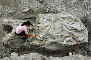 В Хакасии были найдены кости мамонта