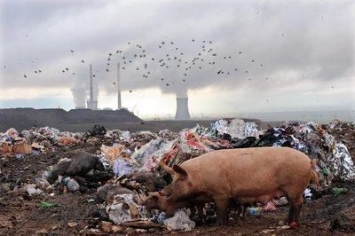 Экологи: 15% смертей в мире вызваны загрязнением окружающей среды